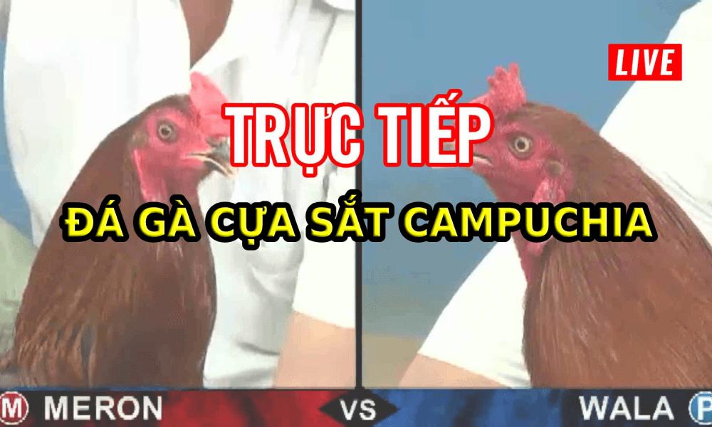 Đá gà online tại SV388